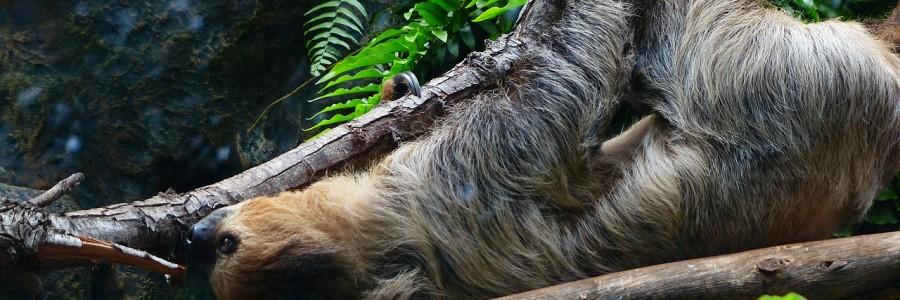 sloth-407088_1280