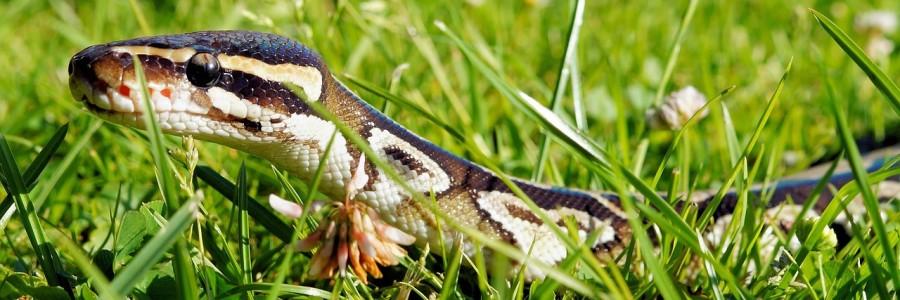 snake-390175_1280
