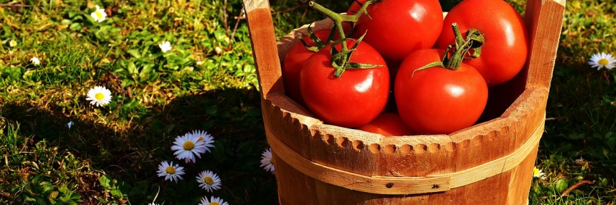 tomatoes-2176846_1280